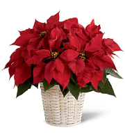 8in Poinsettia - Decorated