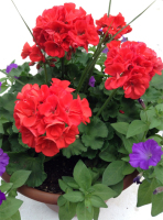 Wickman's Container Gardens