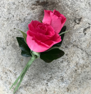 Pink Spray Rose Boutonniere