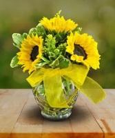 Midwood's Happy Sunflowers