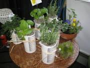 Beaker Herb Plants