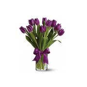 Passionate Purple Tulips