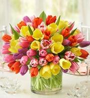 Assorted Tulips 45