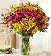 Peruvian Lilies,