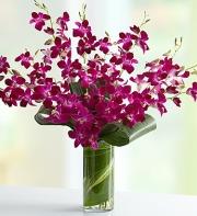 Orchid Embrace Purple