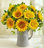 Sunflowers in Pitcher