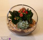 Terrarium Plant