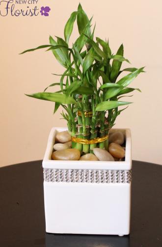 White Ceramic Lucky Bamboo