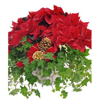 Poinsettia & Ivy Garden Basket