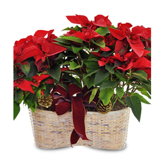 Merry Poinsettia Double Basket