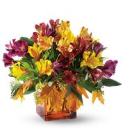 Fall Lilies