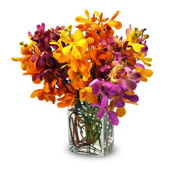 Mixed Mokara Orchids