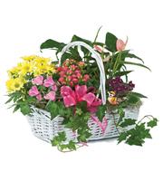 Blooming Garden Baskets