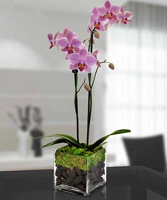Mom\'s Orchid Plant