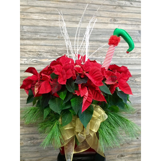 Large Red Pointsettia w Elf