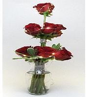 Buehler's Rose
