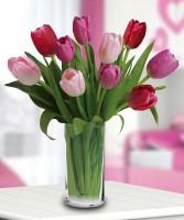 Forever Tulips