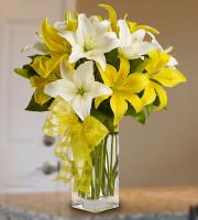 Springtime Lilies