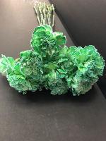 1 Dozen Green Carnations