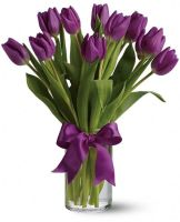 Purple Tulip Flowers