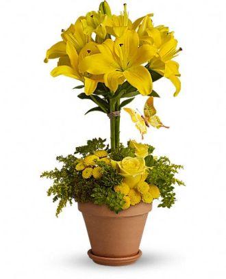Yellow Fellow