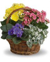 Spring Has Sprung Mixed Basket