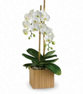 Teleflora\'s Opulent Orchids