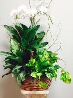Combo Planter & Orchid TLS-101LGO