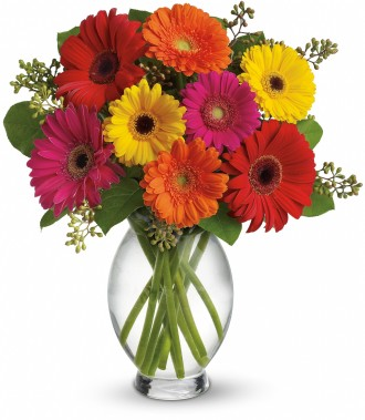 The Gerbera Brights Bouquet