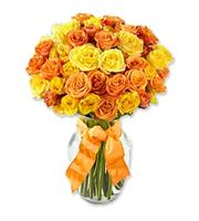 Autumn Glow Roses, thanksgiving
