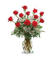 Dozen Roses, anniversary, housewarming, roses