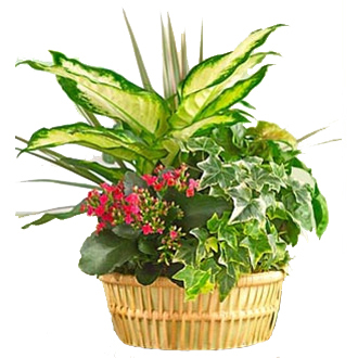 European Garden Delight, plants, year round, birthday, anniversary, new baby, congratulations, thank you, get well, sympathy, corporate gifts