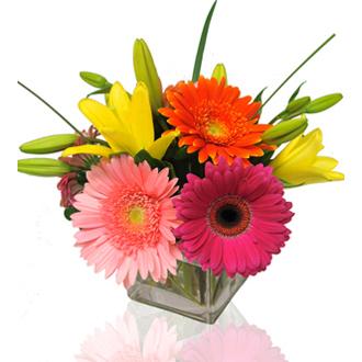Bright and Stunning, daisies, roses, year round