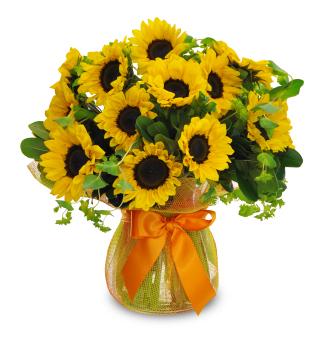 Sunflower Abundance