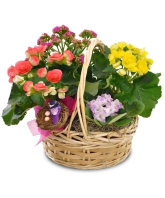 Moms Blooming Garden Baskets