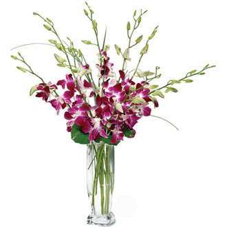 Dendrobium Orchids, get well