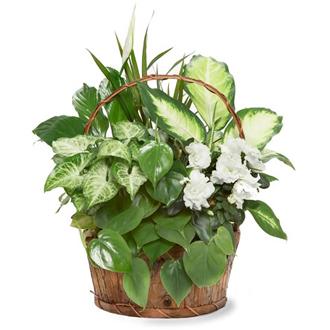 Assorted Planter Basket, plants