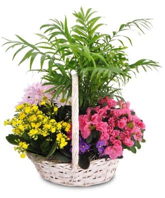 Blooming Spring Garden Baskets