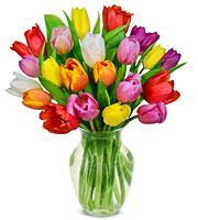 24 Assorted Skagit Valley Tulips
