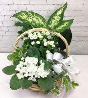 With Sympathy Basket Garden