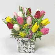 Northwest Tulips