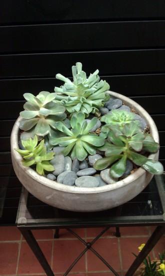Trendy Cement Succulent Garden