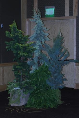 Rental Mixed Foliage Display