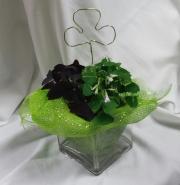 Shamrocks in Glass Cube