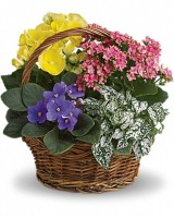 Colorful Planter Basket