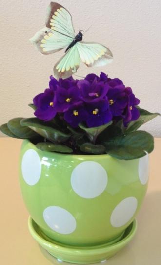 Crane\'s Creation\'s Violet Planter