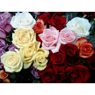 ★Roses Assorted Gift Wrapped★