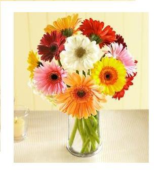 Assorted Gerbera Vase