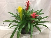 Triple Bromeliad Planter