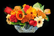 Provincial Bloom